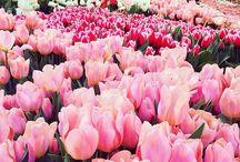 I love spring *