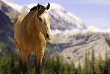 Horses / by Julie Lee