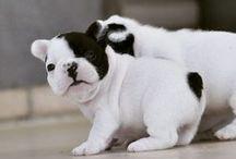 animaux trop choux