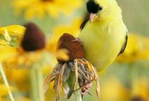 Back Yard Birds / Birds / by Sandy Lueckel