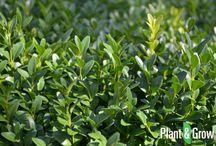 Haagplanten - Plant & Grow / In dit bord vind je een greep uit het haagplanten assortiment van tuinplanten webwinkel Plant & Grow. Online haagplanten bestellen? Surf dan snel naar Plantengrow.nl