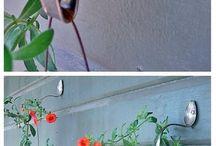 Bahçe çiçekler