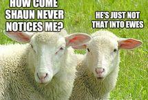 Sheep Memes / Baaaa