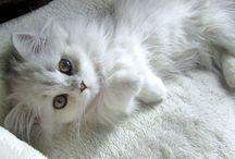 fluffy cats :3