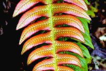 NZ native bush ideas
