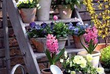 Terrazza~Giardinaggio