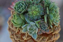 creazione piante