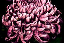 flowers(цветы)