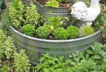 Growing indoor vegetables