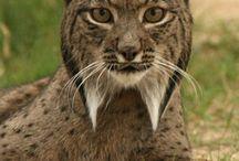 Animales extintos ó en extinción