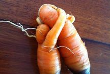 Vibrant Vegetables