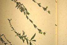 """Herbarios . / Una recopilación de plantas, colocadas en un libro que te hará soñar con la belleza de las plantas silvestres. Disfrutarás y aprenderás a reconocer la naturaleza. Bonito regalo para biólogos y naturistas. Regalo también para enamorados: miniherbarios: """"el lenguaje de las flores""""."""