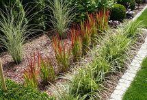 zahrada ornamental grass lawn