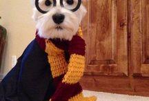 Harry potter⚡️ / Todo un mundo de Harry potter
