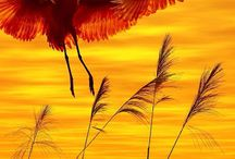 оранжевый / цвет