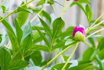 Tuin / Planten en ideeën voor mijn tuin