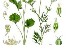 botanical illustration / by PRODUCT BUREAU