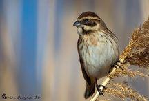 1_My bird photos / Birds, nature, bird photos,doğa,natural life,kuş,kuş fotoğrafçılığı