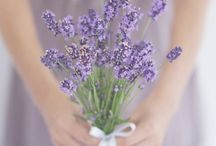 Lavender Lane / All shades of purple...