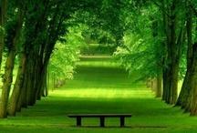 Árvores e Verdes