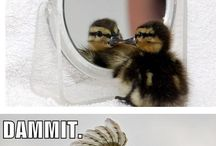 Everybody loves funny animals...