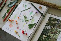 Homeschooling Ideas / by Ann Rinkenberger