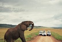 Africa / Wild, untamed and awesome