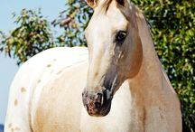 Yellow Stone Creak Horse Auction RP    quarter horse lover made this board  called dream ec5ba202bb