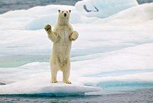 I *heart* polar bears :) / by AJ Burns