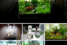 My planted tanks / Planted aquarium