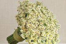 Ślub i wesele motyw rumianek