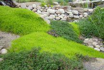 DIY - garden: plants