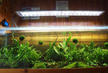 New products and displays / New aquariums and equipment on the market, and new in-store displays.