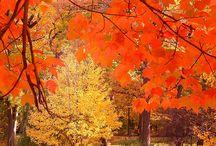 autumn / by Zoe Chapman