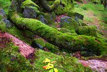 Moss Paradise