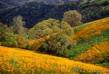 Wildflowers California / places to enjoy the most beautiful spring wildflowers