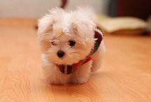 So Cute!  / by Sara Harmon