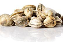 Productos del mar / Pescado blanco, pescado azul y molusco bivalvo.