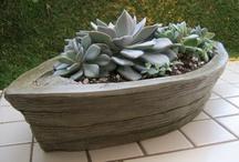 Cactus succulents / Nice...