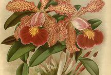 Цветы-цветочные - орхидеи / Категория - цветы