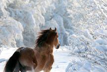Hobused ja ponid