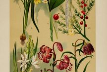 Botany / Pen drawings, watercolors, prints and oil paintings about flowers and trees.