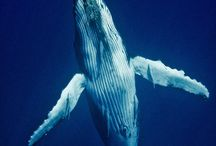 Whale Jaw Abdomen