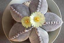 That´s so cute plant!