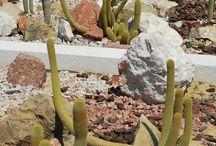 Cactus y Suculentas / by Maria Gy