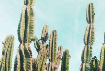 Succulent Obsessed / by Beth Blackburn
