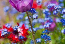 bouquets et jardins  de fleurs