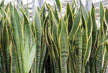 planta purifica ar