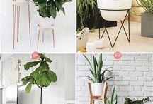 Cactus indoor ideas