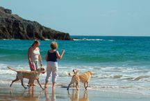 Dog Friendly Beaches in the UK